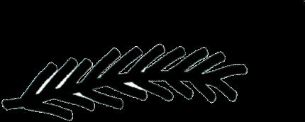 La plume du bandeau Plume pour la respiration